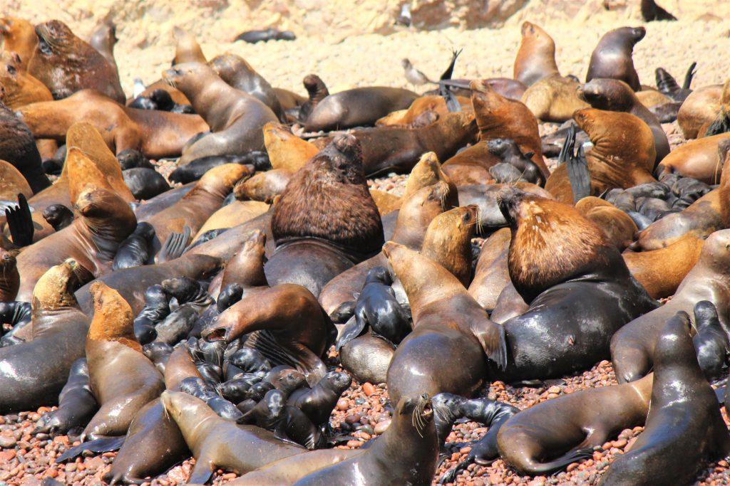 世界一周旅行南米ペルー観光スポットバジェスタ島
