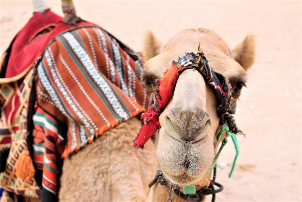 ヨルダン旅行ペトラ遺跡ラクダで周遊