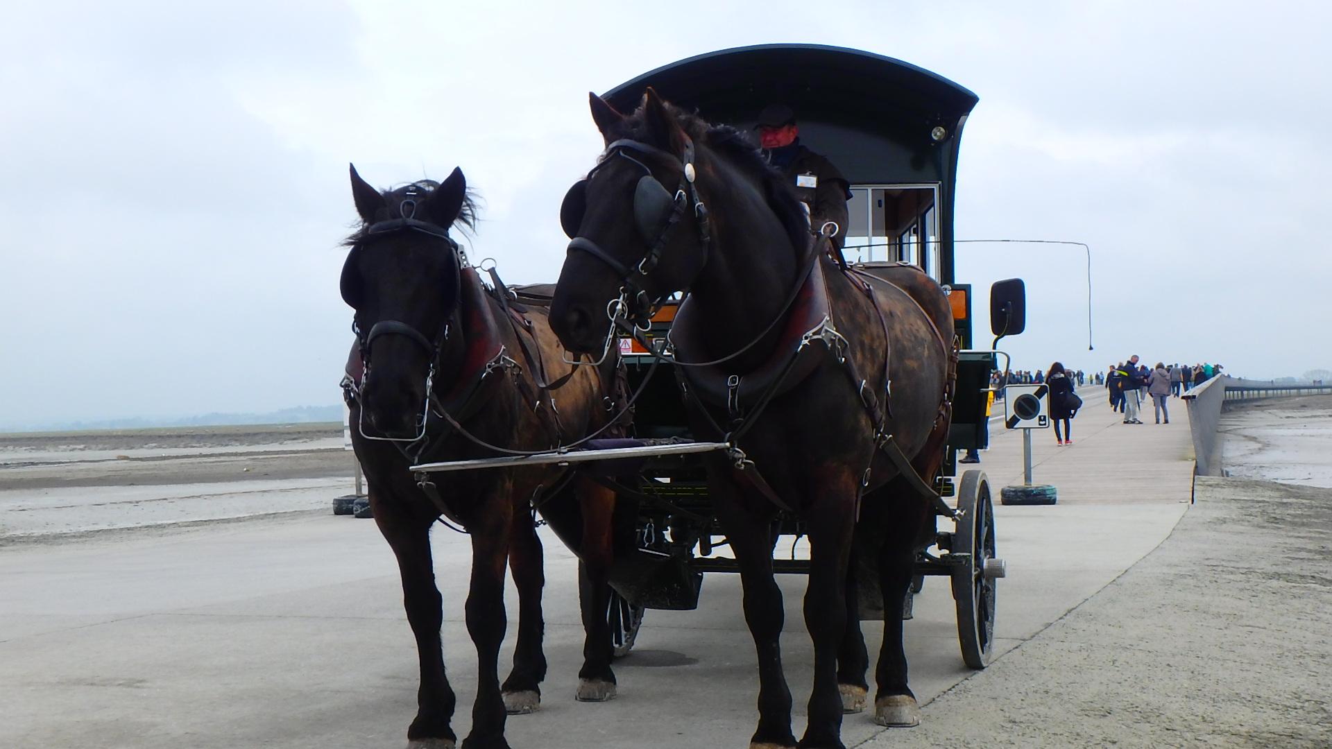 モンサンミッシェル対岸移動の馬車が格好いい