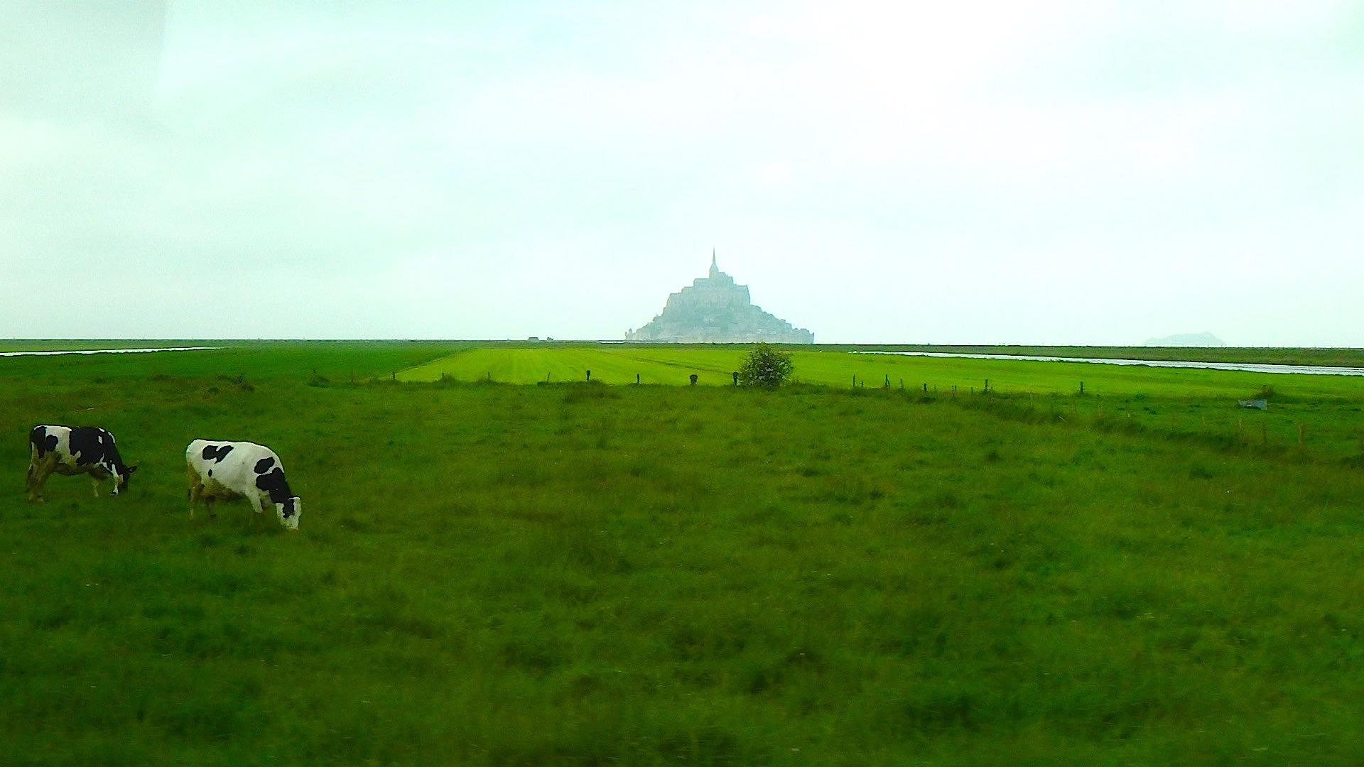 霧の中に現れる幻想的なモンサンミッシェルと牧場