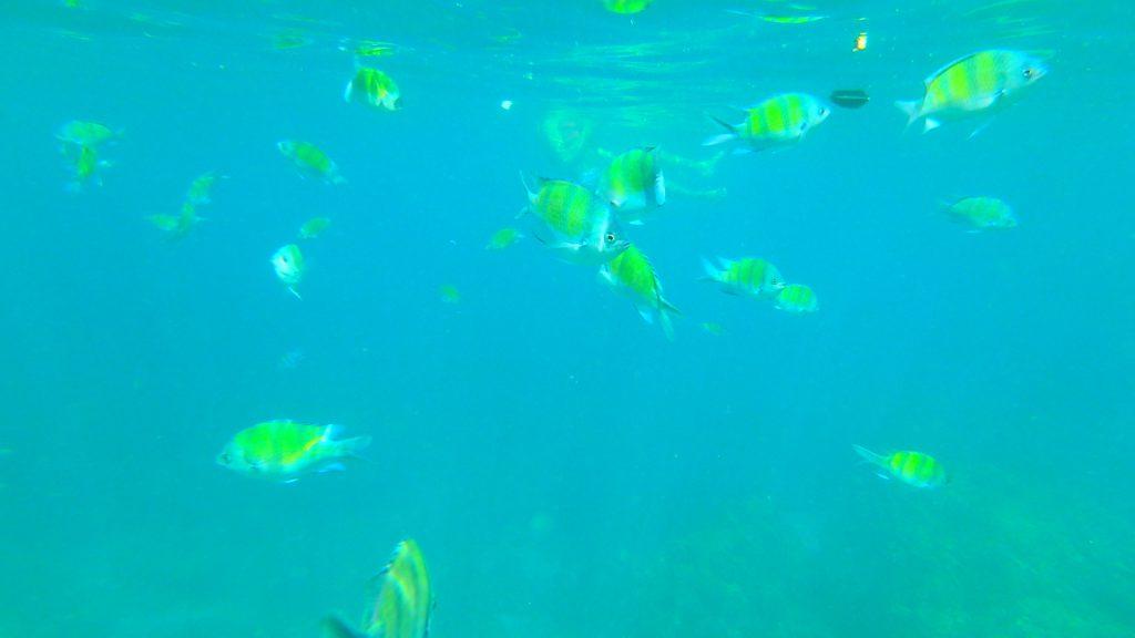 ピピ島シュノーケリング魚がいっぱいのピピレイ