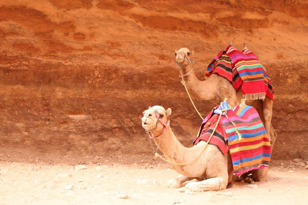 ヨルダン旅行ペトラ遺跡らくだ