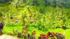 GW〜お盆におすすめの海外旅行先 バリ島