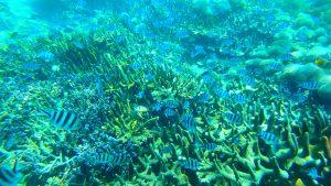 GW〜お盆 海外のビーチでシュノーケリング バリ島