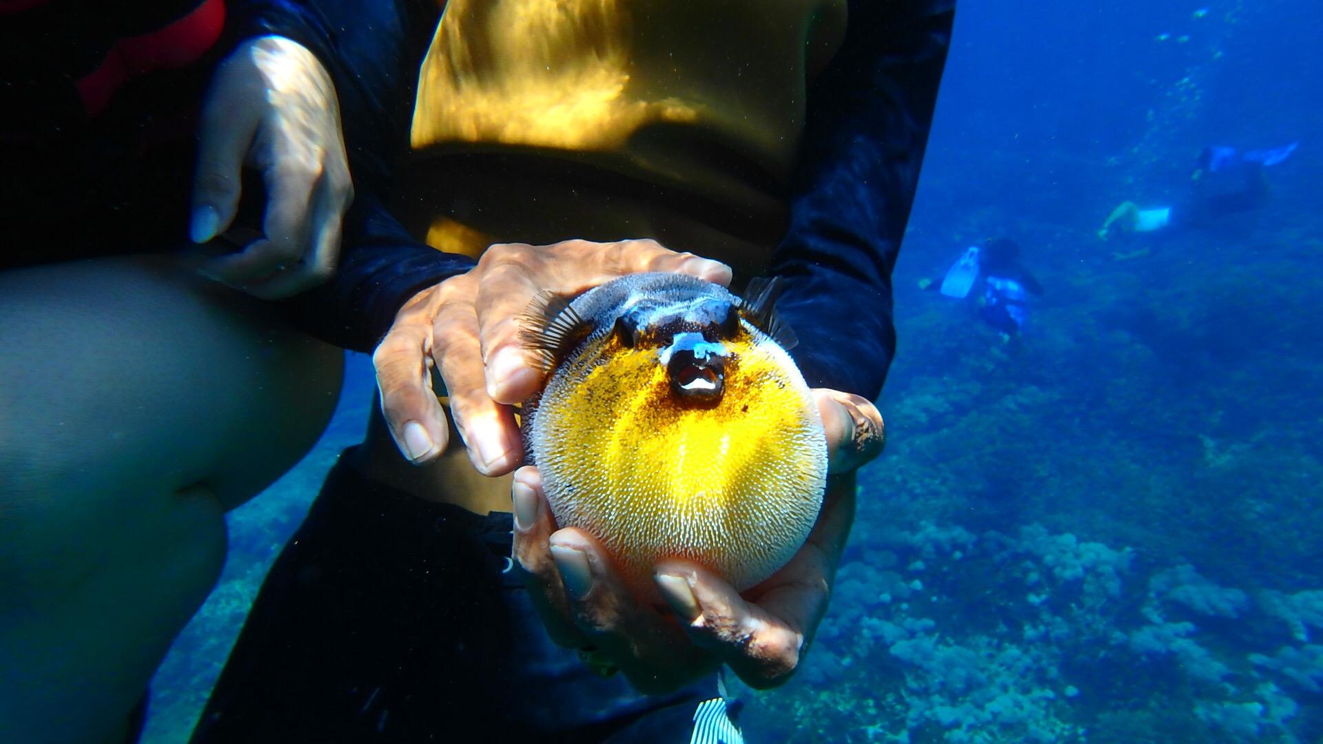 バリ島離島のレンボンガン島シュノーケリング謎の魚