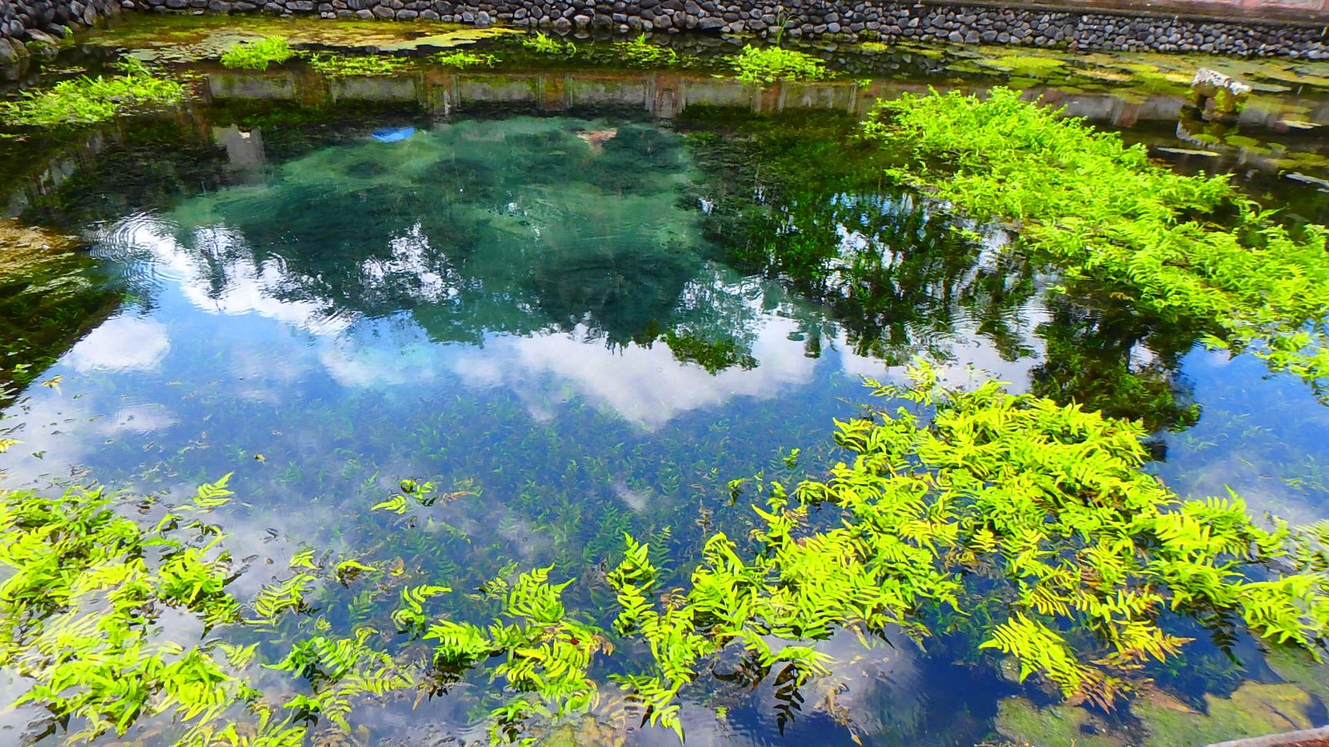 バリ島ティルタウンプル寺院聖水の沸く神聖な泉