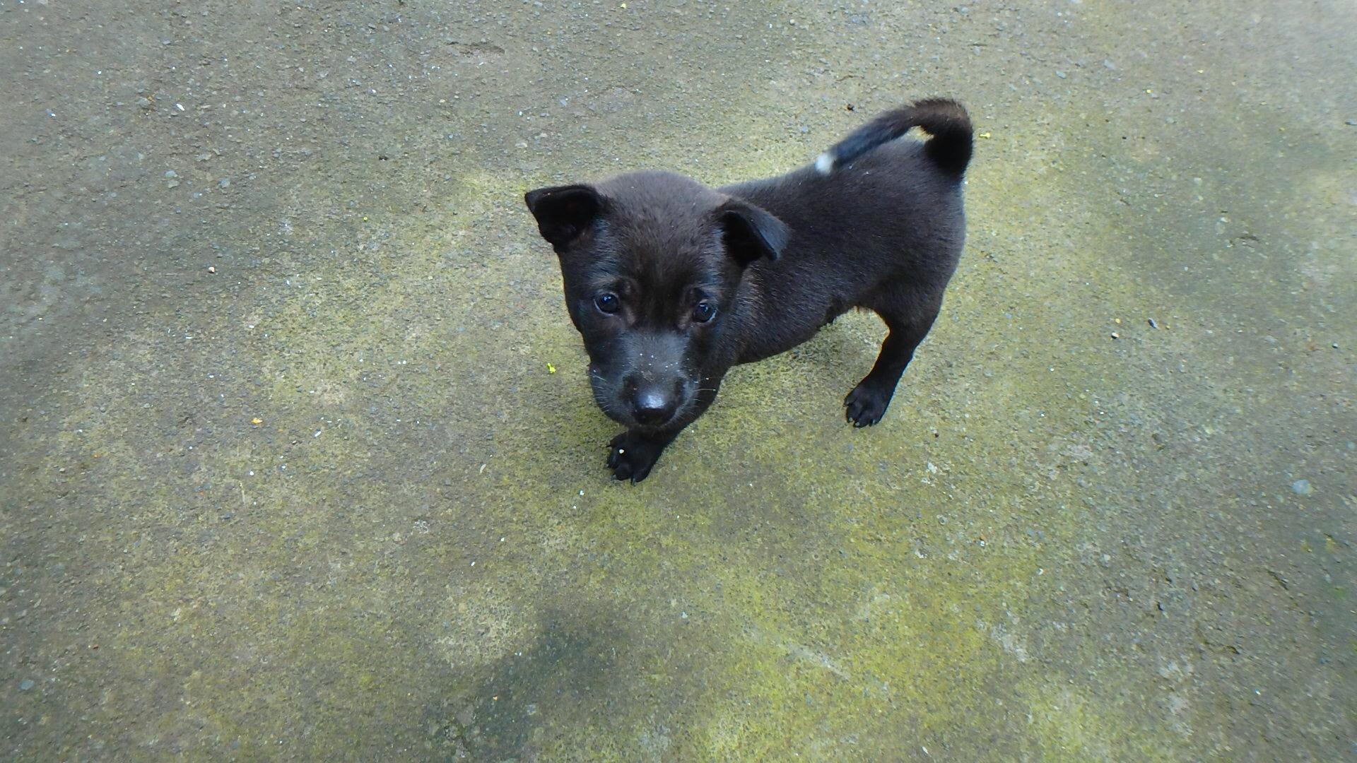 バリ島の可愛すぎる野良犬