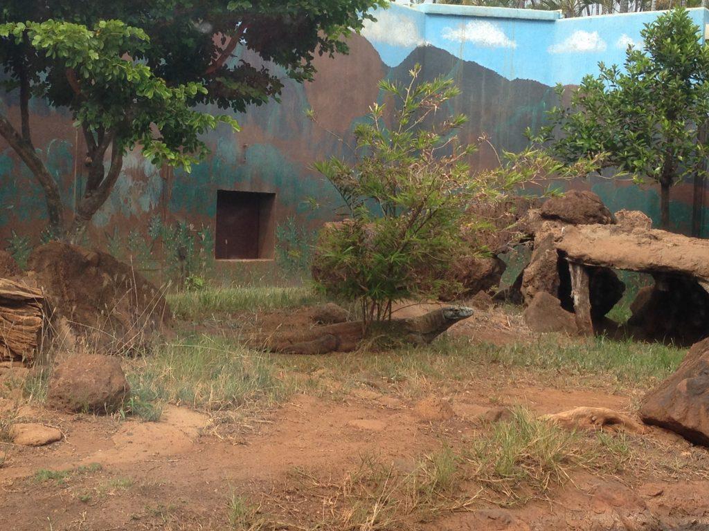 ハワイワイキキの動物園HonoluluZooのイグアナ