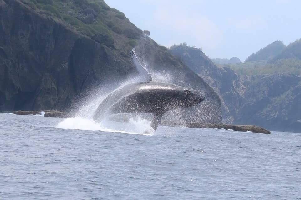 小笠原諸島「南島」でクジラやイルカが観れるツアー