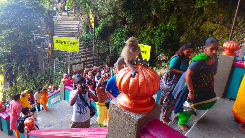 マレーシア1日弾丸旅行 バトゥ洞窟 猿