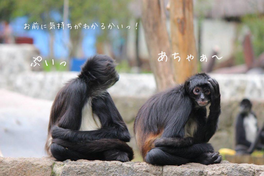 グアテマラの見どころ 無料動物園が楽しい