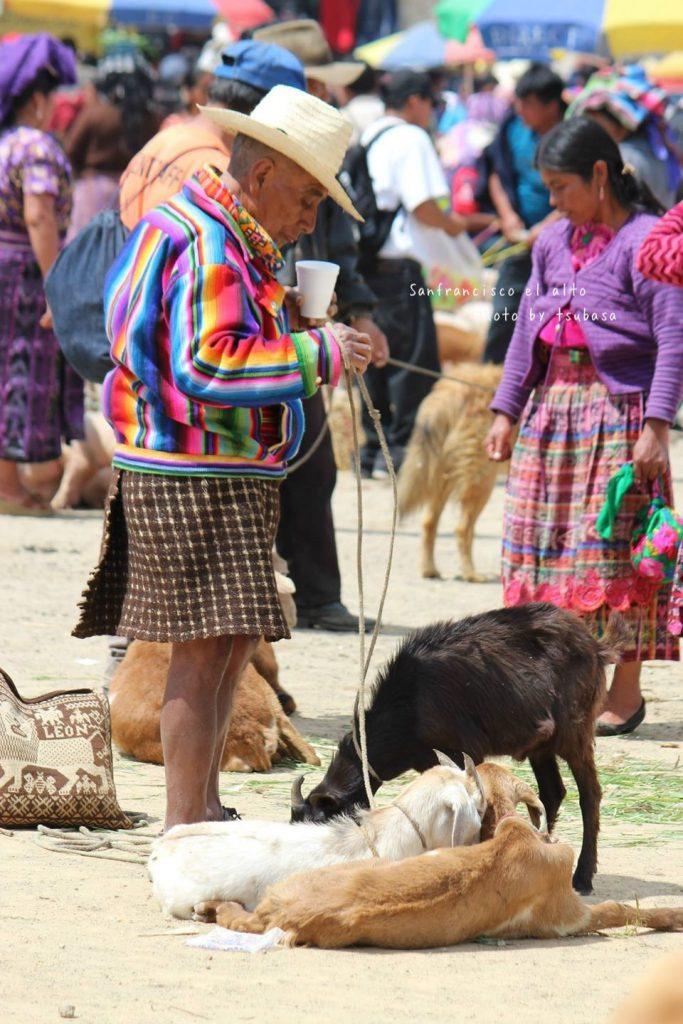 グアテマラの穴場 おすすめ観光 家畜市