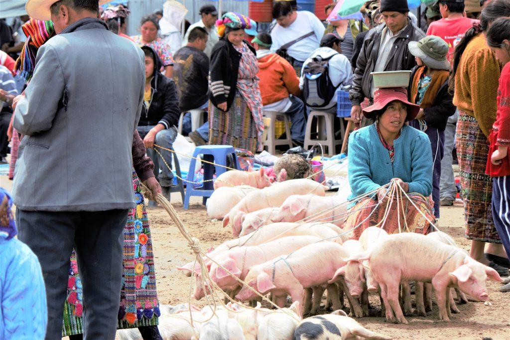 冬休みの海外旅行にオススメの国 グアテマラの家畜市