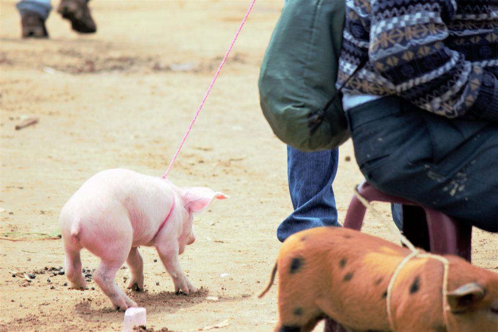 中米グアテマラの家畜市 現地の人の生活が見れる