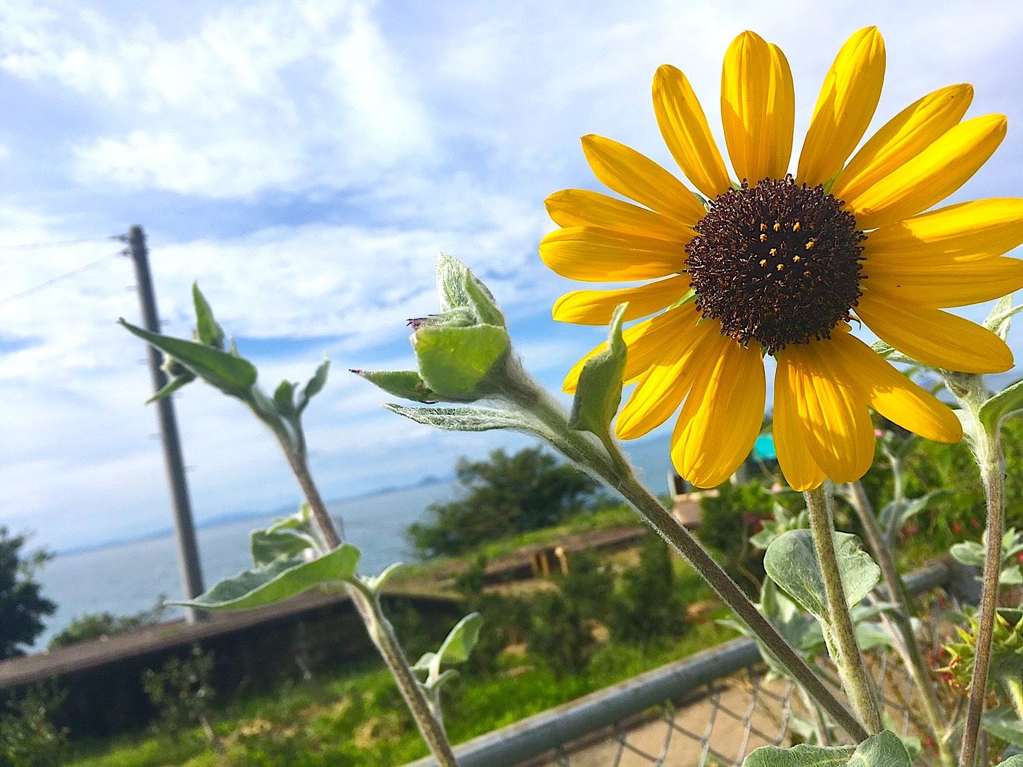 愛媛県のおすすめフォトスポット 日本一海に近い下灘駅