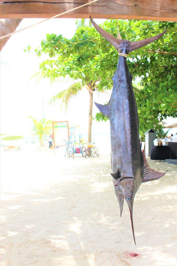 メキシコ カンクン 魚