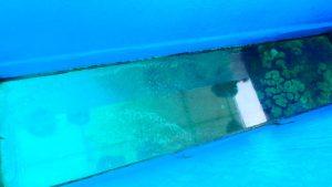 百合が浜行きのボート タンディーマリンのガラスボート