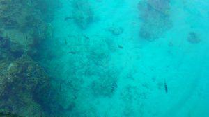 百合が浜行きのボート タンディーマリンのガラスボートから魚