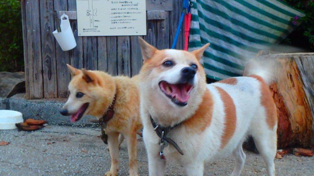 映画「めがね」の犬 ヨロン島ビレッジ ケンとマーゴ