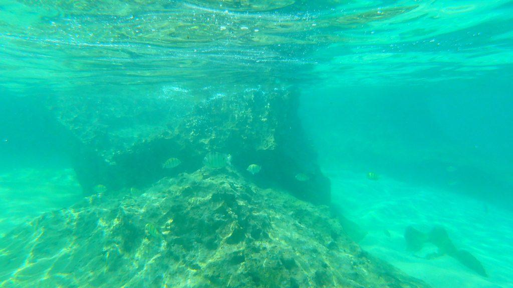 与論島 シュノーケリングスポット メーラビビーチの水中