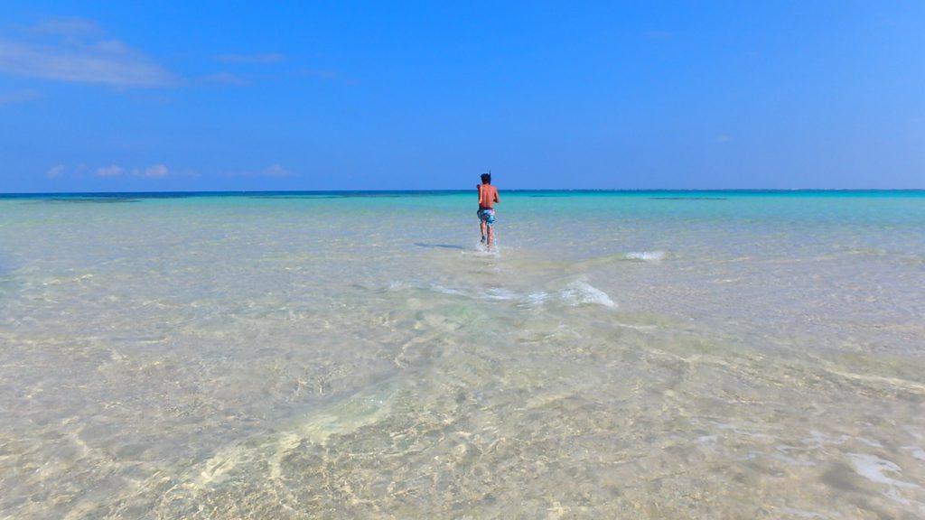 与論島 百合が浜の出現時期とスケジュール