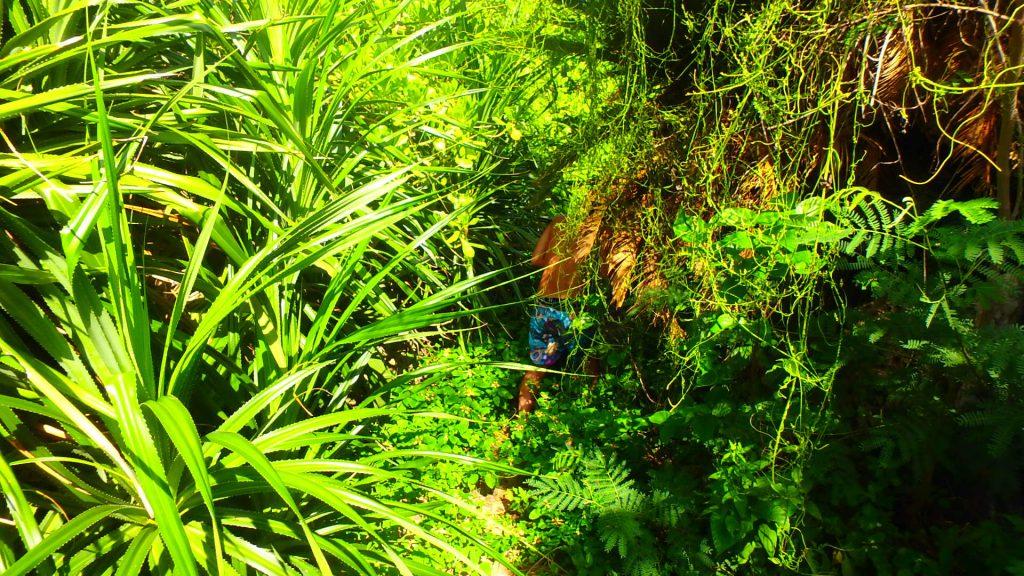 与論島 ウドノスビーチの入り口がジャングル
