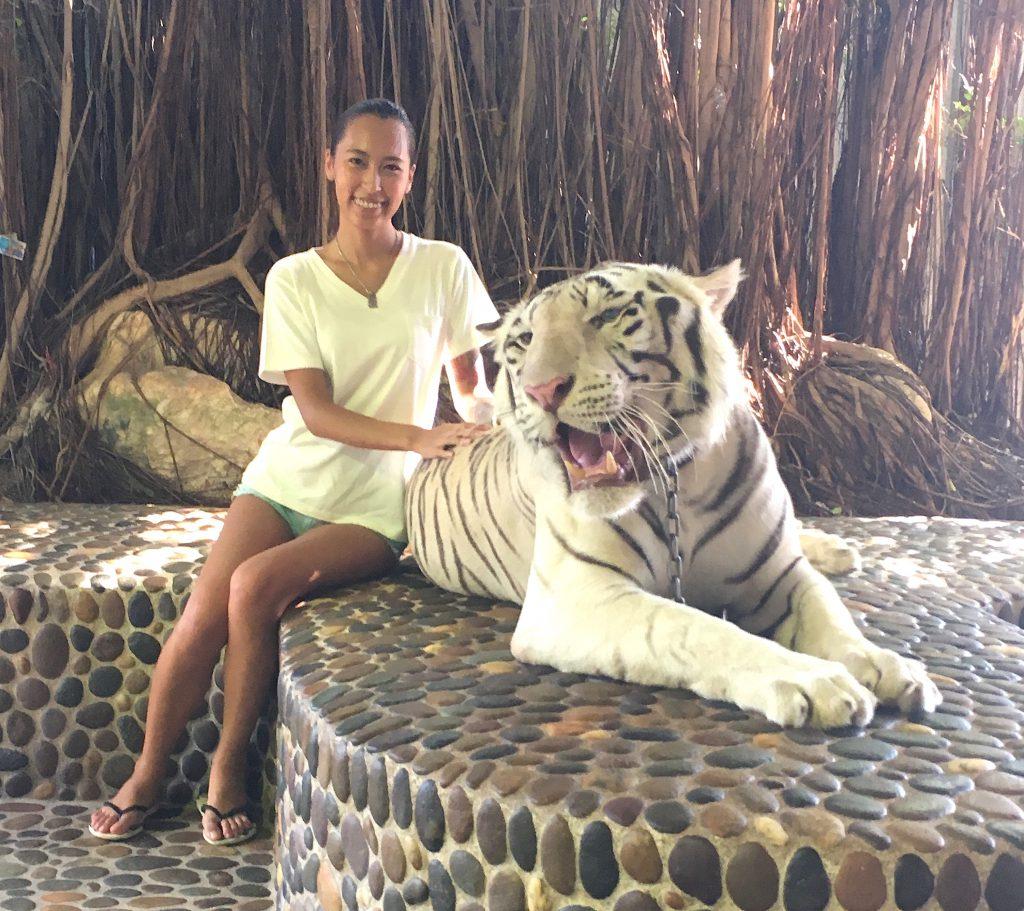タイ パタヤでホワイトタイガーと写真撮影
