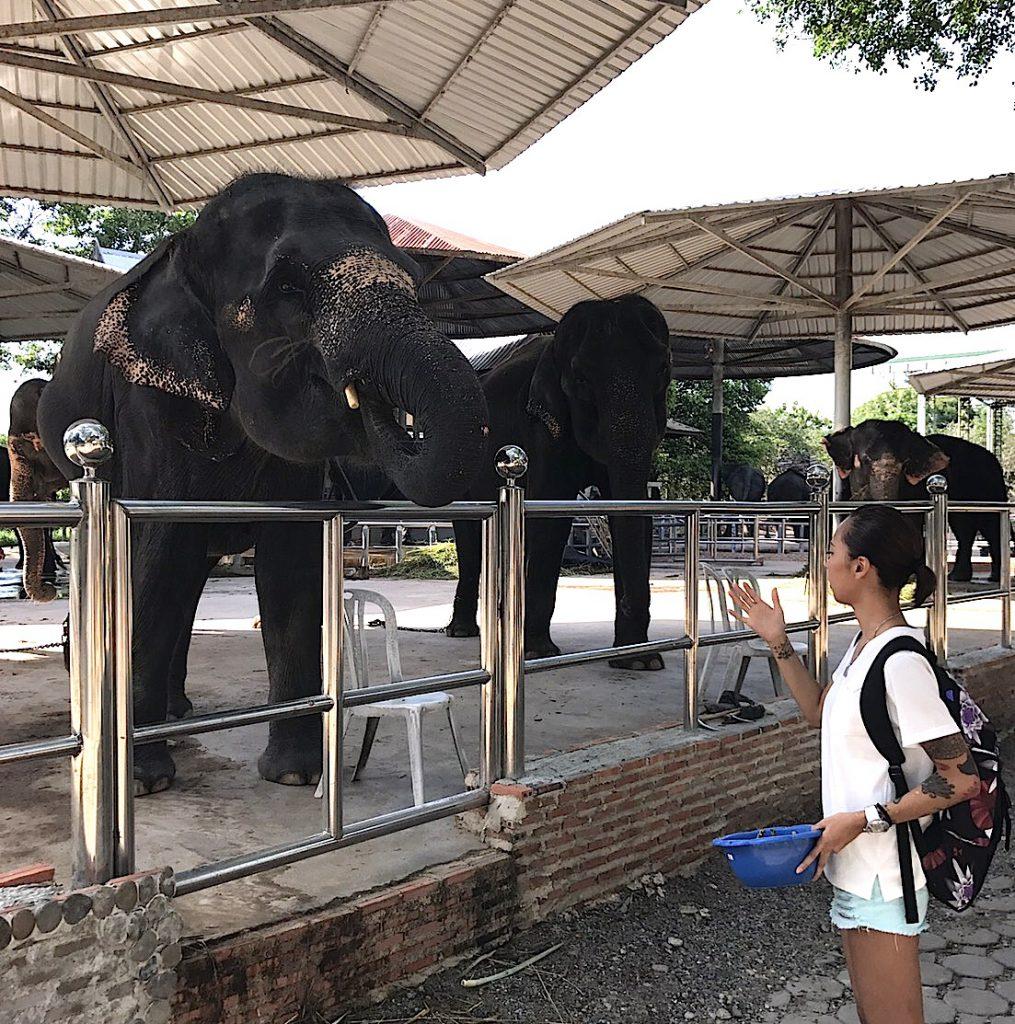 タイのパタヤ ストーンパークで像に餌やり