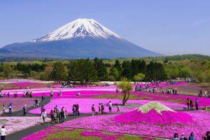 GWにおすすめの国内旅行先 富士山と芝桜