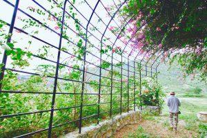 カンボジア ケップ 日本人経営の胡椒農園