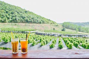 カンボジア ケップ GREEN DOOR FARM