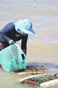 カンボジア ケップの名物 カニの水揚げ