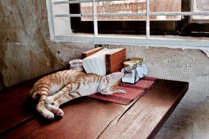 カンボジア ケップ 猫のいるカフェ KEP COFFEE