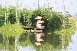 インレー湖のおすすめ観光 トマトの水上栽培