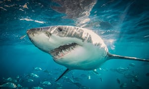 生理中に海に入るのは危険 サメに注意