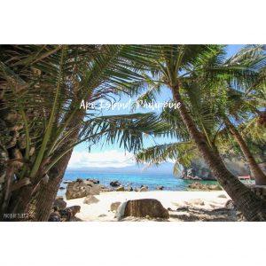 フェリピン アポ島でシュノーケリング&ダイビング
