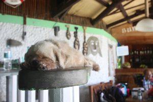 フィリピン アポ島のホテル・安宿