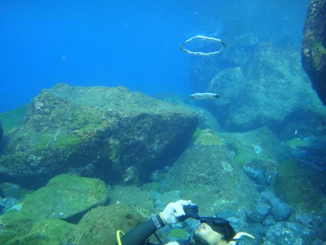 八丈島での体験ダイビングがおすすめ