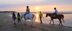 台湾 台北で乗馬体験 おすすめアクティビティ