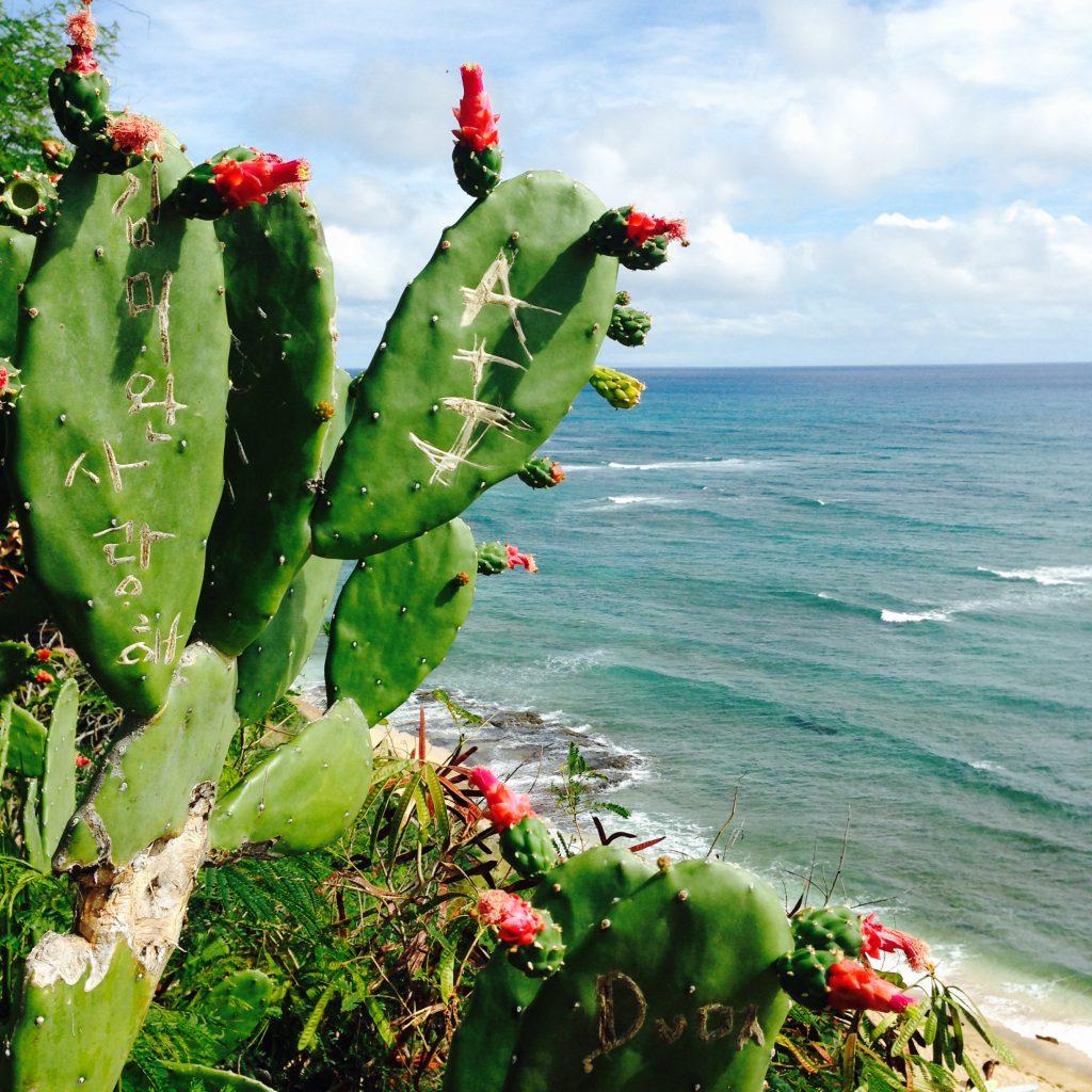 ハワイ ダイヤモンドヘッドビーチのクリスマス