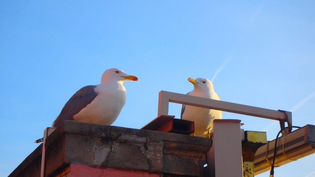 バルセロナ 鳥