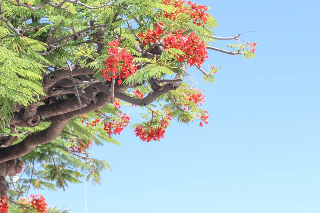 ハワイ生活 農業 ブログ