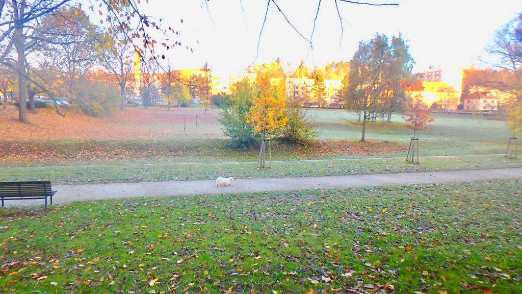 チェスキークルムロフ 公園 散歩 朝
